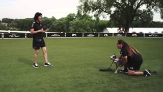 Dog Obedience - Come - Pro Plan P5 Training
