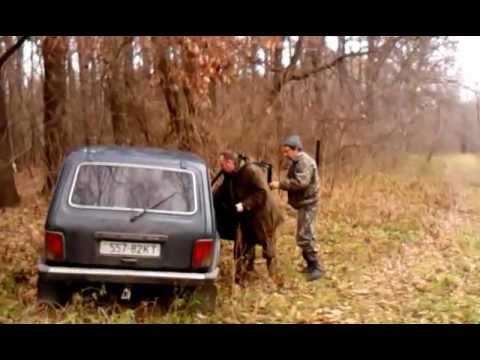 Индивидуальная трофейная охота на кабана в Киевской области
