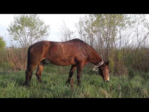 Продолжительность жизни лошадей в домашних условиях