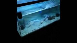 DIY saltwater fish tank / aquarium sump tank
