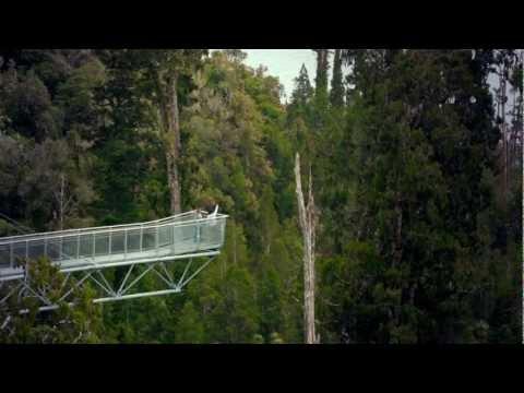 West Coast Treetop Walk, New Zealand