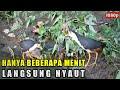 Suara Pikat Burung Ruak Ruak Paling Di Cari Hd 1080p Ngeban(.mp3 .mp4) Mp3 - Mp4 Download