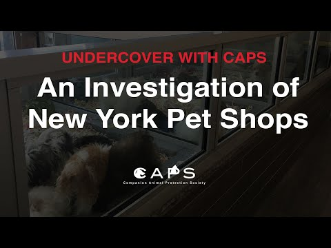 Undercover With CAPS: An Investigation Of New York Pet Shops #AdoptDontShop