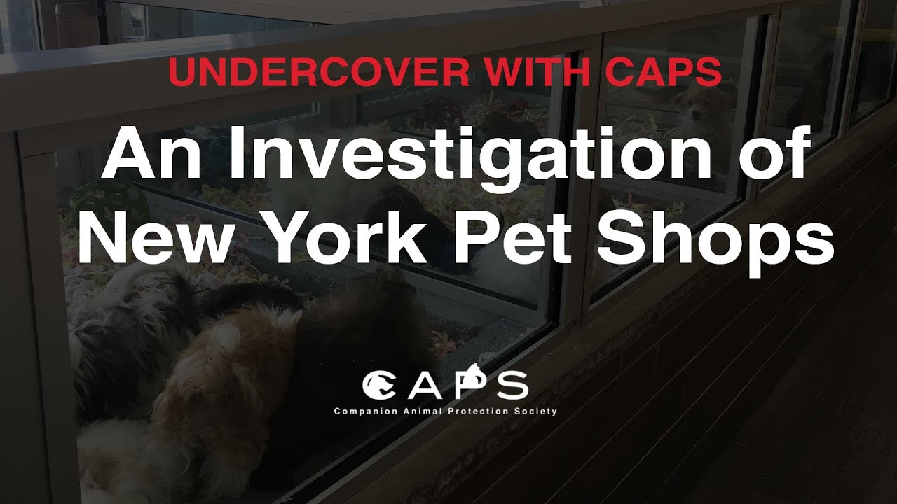 Undercover with CAPS: An Investigation of New York Pet Shops