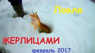 Рыбалка жерлицами в Республике Коми жерлицы  Зимой 2017