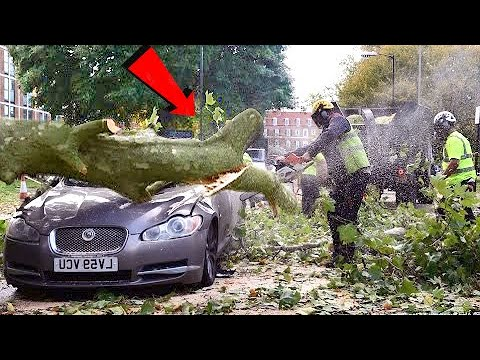 Tree Cutting Fails & Idiots Working With Chainsaw ! Extremely Dangerous skills Tree Falling