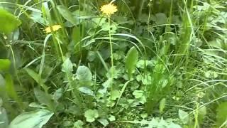 Видео урок для садоводов. =)