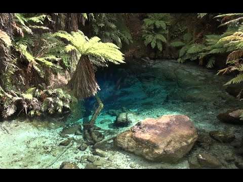 Te Waihou Walkway and Blue Spring Putaruru New Zealand ** only 30 minutes from Rotorua **  2015