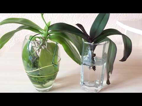 Черные пятна на листьях орхидеи. Кто знает, что это и как с этим бороться и лечить?