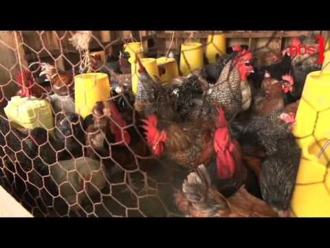 Uganda, South Sudan Partner on Bird Flu