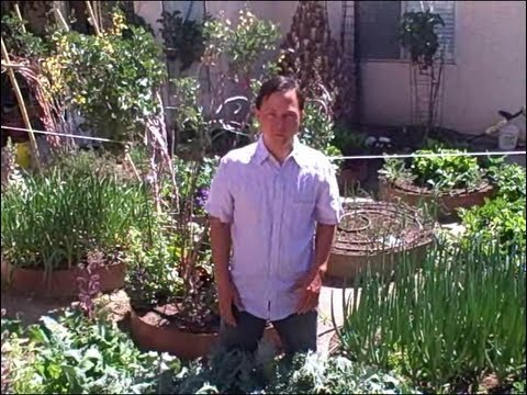 Urban Winter Desert Vegetable Garden Tour and Tips - 동영상