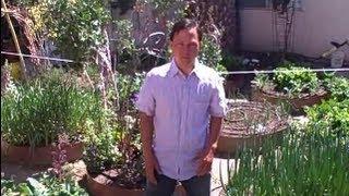 Urban Winter Desert Vegetable Garden Tour and Tips