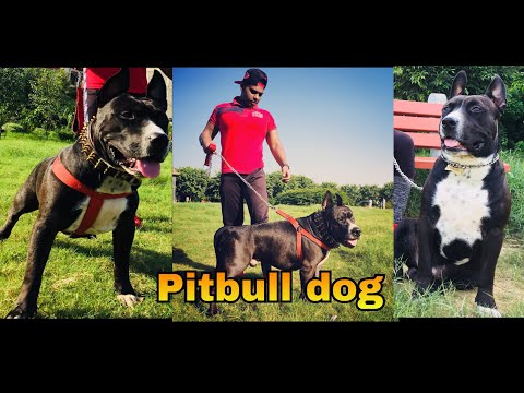 Cheapest Dog MARKET IN DELHI || WHOLESALE | RETAIL | Dogs in CHEAP PRICE WITH PHONE NUMBER🔥