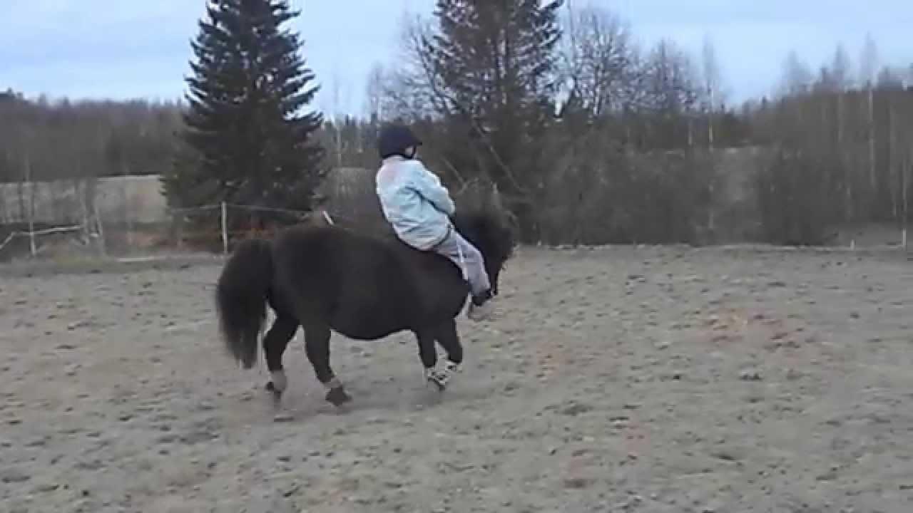 Hullu Poni
