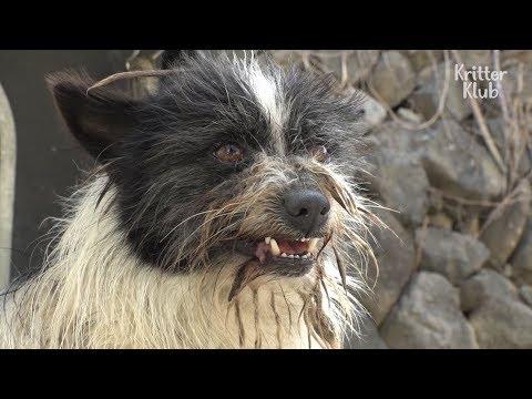 A Shocking Truth Behind This Cute Dog's Dog Behavior | Kritter Klub