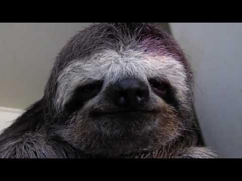 Black Metal Sloth
