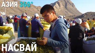 Баткен – родина насвая   АЗИЯ 360° cмотреть видео онлайн бесплатно в высоком качестве - HDVIDEO