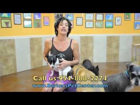 Fort Lauderdale Dog Training, Boarding & Pet Hotel in Fort Lauderdale