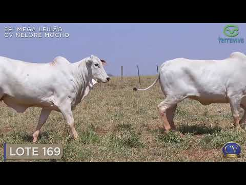LOTE 169