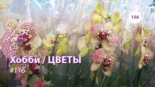 видео: 156#116 / Хобби-Цветы / 03.2019 - ЛЕРУА МЕРЛЕН (ЗЕЛЕНОГРАД). ОБЗОР