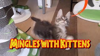 Mingles with Kittens