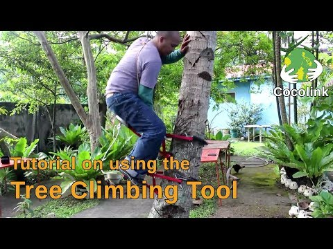 Tutorial On Using The Tree Climbing Tool