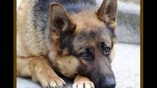 Собака - наш верный друг