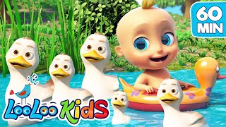 Five Little Ducks | LooLoo Kids Nursery Rhymes and Children`s Songs