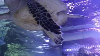 Как Выглядит Морская Черепаха Снизу