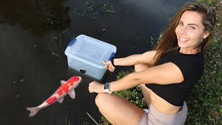 Girl Catches Colorful Fish For My Massive Fish Collection!!