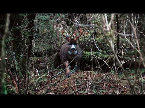 Timber Hunting Sitka Blacktail RUT 2018