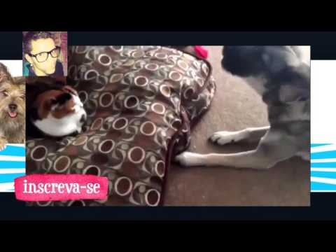 funny cats stealing dog beds