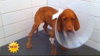 Polizeieinsatz: Skrupelloser Hundehandel in Dresden | Sat.1 Frühstücksfernsehen