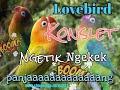 Suara Masteran Burung Lovebird Konslet Gacor Ngetik Ngekek Durasi Panjang  Mp3 - Mp4 Download