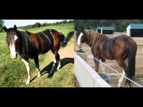Самые РЕДКИЕ и необычные масти лошадей! Самые редкие лошади.
