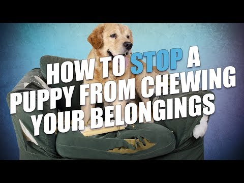 How To Stop A Puppy From Chewing Your Belongings