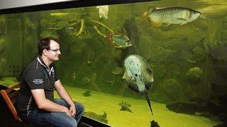 Inhalt von 500 Badewannen: Riesiges privates Aquarium in Niestetal