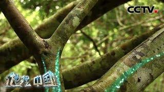 《地理·中国》 20191211 探秘热带雨林3| CCTV科教