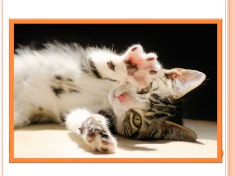 How Much Does It Cost To Get Your Cat Declaw