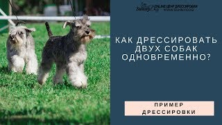 Практика. Как дрессировать двух собак ?  Две собаки дома и на улице - обучение и воспитание.