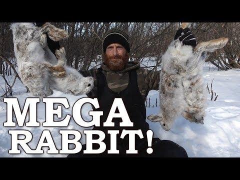 Catch and Cook [Clean] WILD Snowshoe Hare | Massive Catch!!! | Rabbit Sandwich & Stew