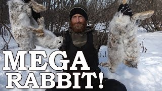 Trapping WILD Snowshoe Hare in SNOW | Massive Catch!!! | Rabbit Sandwich & Stew