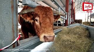 Comment nourrir les bovins ?