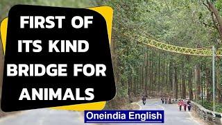Uttarakhand builds unique bridge for reptiles to cross | Oneindia News