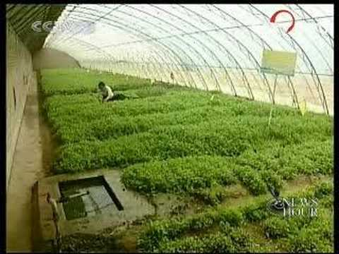 Beijing goes organic