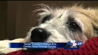 "Video Shelter dogs used in ""Annie"" at the Walton Arts Center download MP3, 3GP, MP4, WEBM, AVI, FLV September 2017"