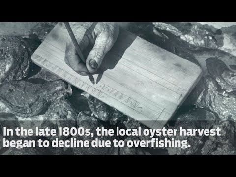 From the Vault: All About Oyster Shells