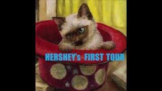 『すべての若き馬鹿野郎ども』 HERSHEY's Glam Rock Band HERSHEY's dem...