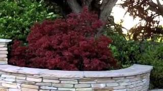 Blog 2 - Foliage Color in Design