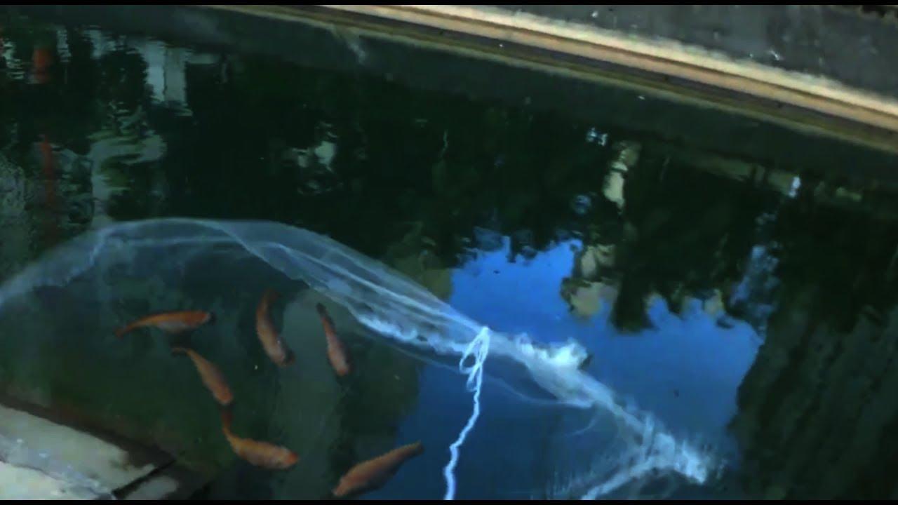 ทอดเเหจับปลาคลองธรรมชาติ